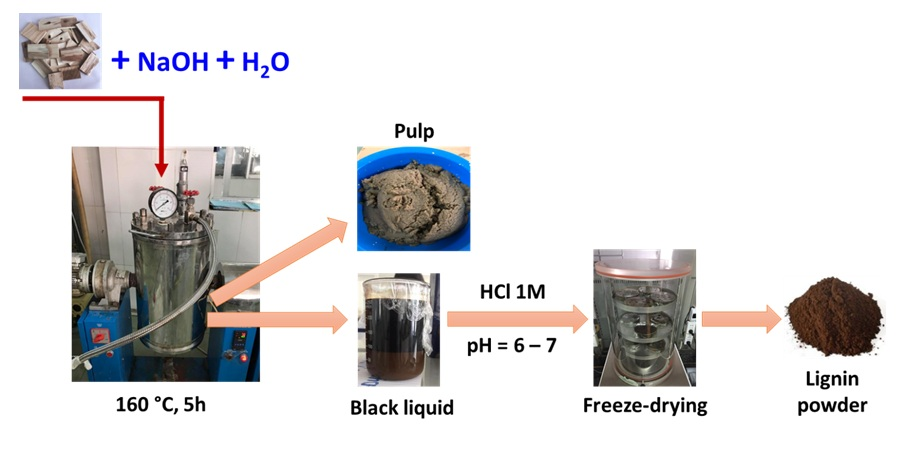 Figure 2  The scheme of lignin production from wood chips of the Earleaf Acacia tree using NaOH at 160 °C for 5h followed by neutralizing using HCl 1M and freeze-drying at – 50 °C for 12 h.