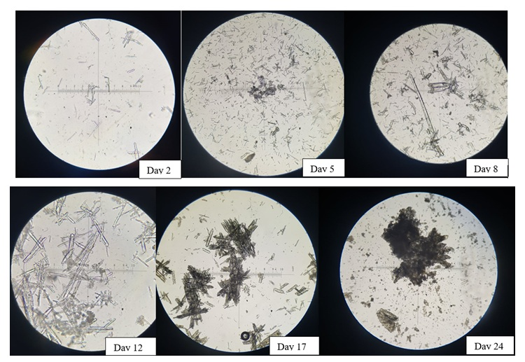 Figure 5  Crystal growth observation by microscope x10
