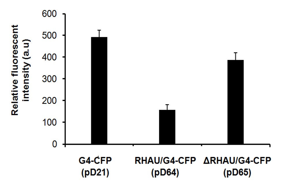 Figure 5  -value between pD21 and pD65 is 0.018. All experiments were performed in the triplicate.