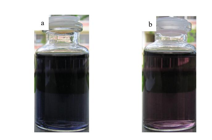 Figure 1  ) Phức màu của dung dịch amylopectin