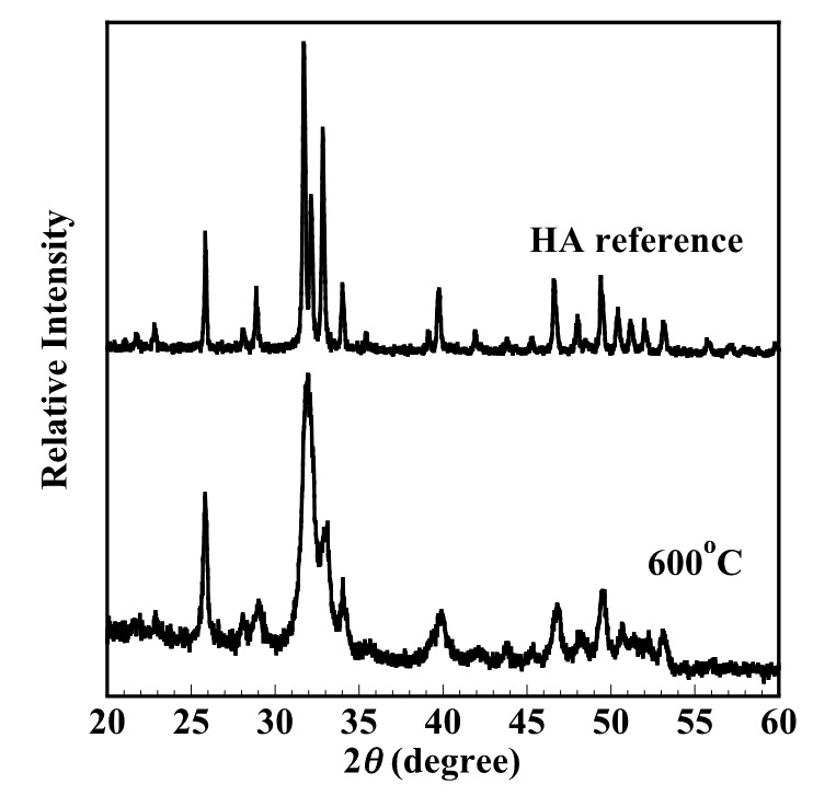 Figure 1  . XRD pattern indicated that all peaks belonging to the apatite phase (main apatite peak at 2theta = 26, 32 and 41 degrees).