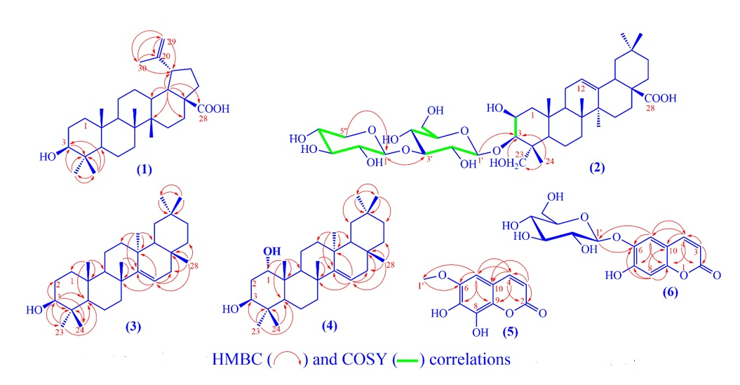 Figure 1  The key HMBC and COSY correlations of compounds 1-6