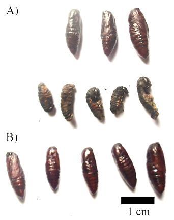 Figure 3  ).