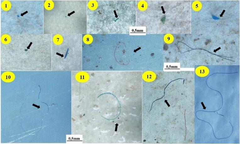 Figure 2  : Dạng mảnh (1–7); Sợi cước (8–9); Sợi nhựa mỏng (10); Sợi nhựa cứng (11–13)]