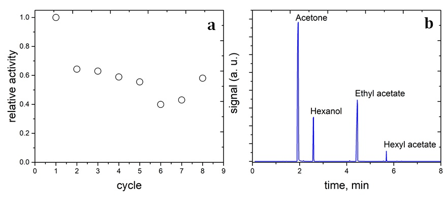 Figure 5  The relatively catalytic activity of the lipase/aminated-silica sample for the transesterification reaction between 1-hexanol and ethyl acetate (a) and the chromatogram of the reaction mixture (b).