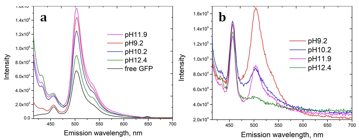 Figure 3  The fluorescence spectra of the GFP/aminated-silica samples dispersed in water at pH7.0 (a) and after freeze-dried and redispersed in water at pH7.0 (b).
