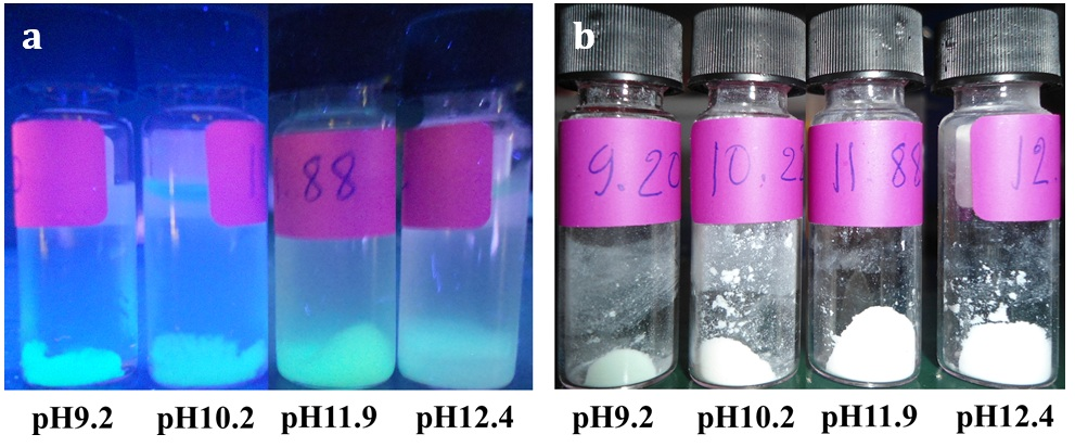 Figure 2  The digital images of the GFP/aminated-silica samples dispersed in water (a) and being dried with a lyophilizer (b) exposed under a UV light with a wavelength of 365 nm.