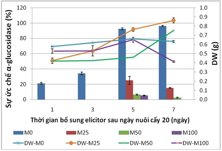 Figure 6  Đồ thị thể hiện sự ảnh hưởng của nồng độ methyl jasmonate đến khối lượng khô (DW) và hoạt tính ức chế α-glucosidase của rễ tơ Ké hoa đào. M0, M25, M50, M100 là methyl jasmonate ở các nồng độ 0, 25, 50, 100 µM