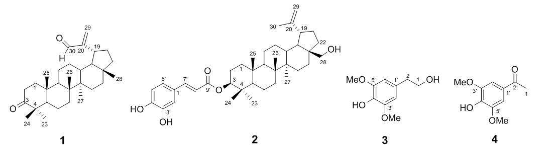 Figure 1  L.)