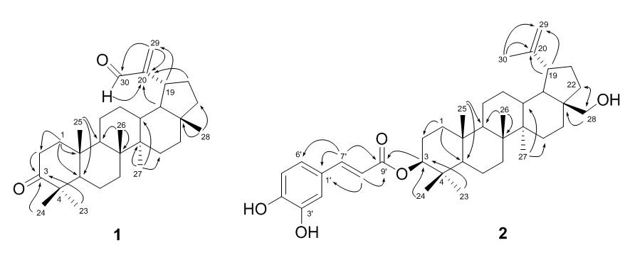 Figure 2  <b> 2</b>