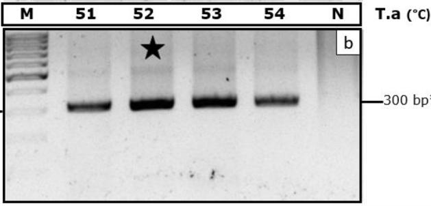Figure 2  C). M, DNA ladder100 bp. N indicates negative control. The dark star indicates optimal temperature.