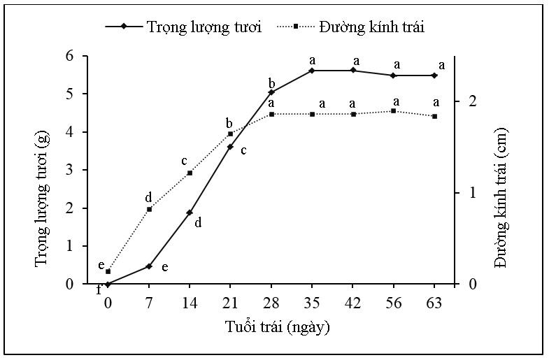 Figure 3  Trọng lượng tươi, đường kính trái cà chua bi từ 0 đến 63 ngày tuổi