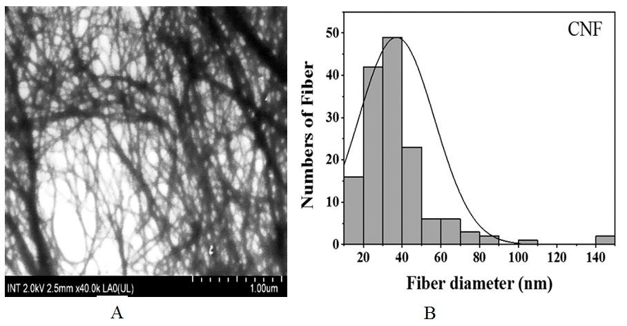 Figure 5  (A) Ảnh FESEM huyền phù CNF phân tán trong nước cất; (B) Giản đồ phân bố kích thước sợi CNF.