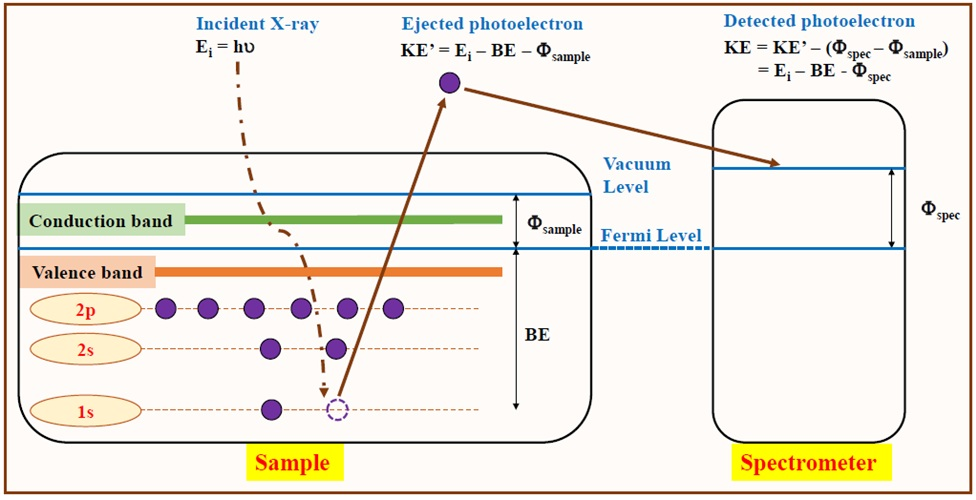 Figure 2   A typical XPS spectrum is a plot of the number of detected electrons versus their corresponding BE. Each element near the surface region produces a specific set of peaks at characteristic BEs.