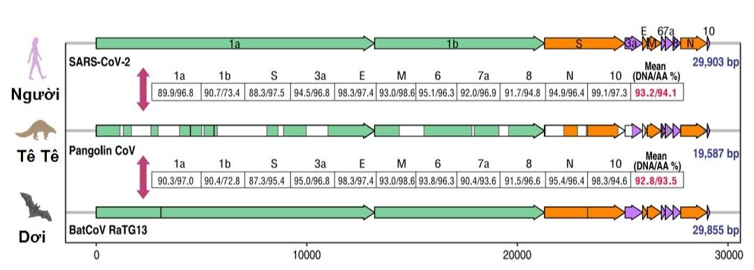 Figure 5  . Độ tương đồng được thể hiện là tương đồng về trình tự DNA/protein.