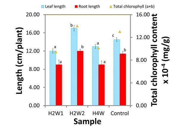 Figure 3  Chiều dài lá, chiều dài rễ, và hàm lượng chlorophyll tổng của cây bổ sung vật liệu lai trong hai tuần đầu tiên (H2W1), trong hai tuần cuối (H2W2), trong suốt bốn tuần (H4W), và của cây xà lách đối chứng (Control).
