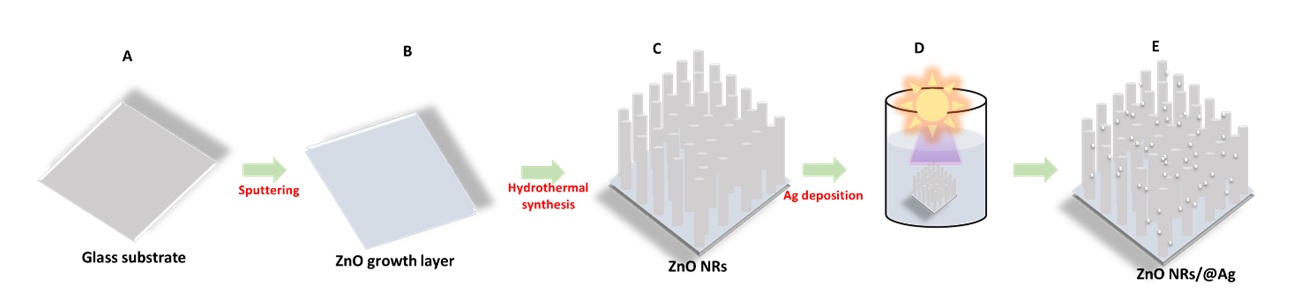 Figure 1  ) Ag assembled onto the ZnO NRs platform.