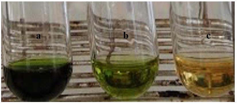 Figure 7  Dịch chiết EtOH từ lá (a), cành (b) và mô sẹo Xạ đen (c)