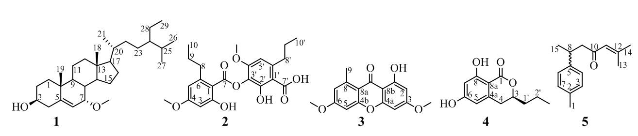 Figure 1  <b> 5</b>