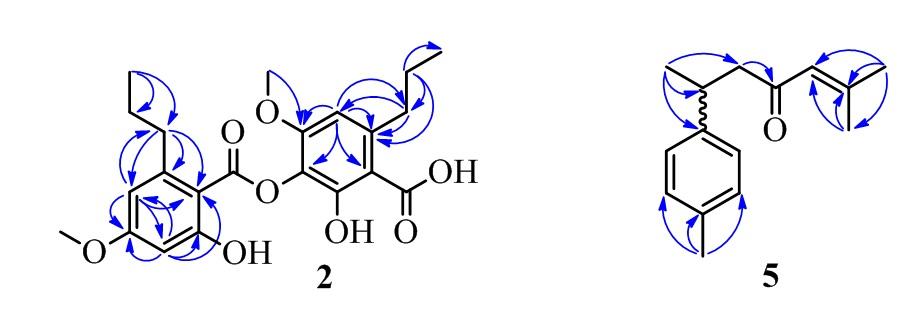 Figure 2  <b> 5</b>