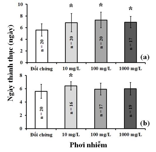 """Figure 3   trong phơi nhiễm với nước rỉ nhựa từ túi đựng rác (a) và áo mưa sử dụng một lần (b). Dấu """" * """" thể hiện sự khác biệt thống kê (p < 0,05; ANOVA)."""