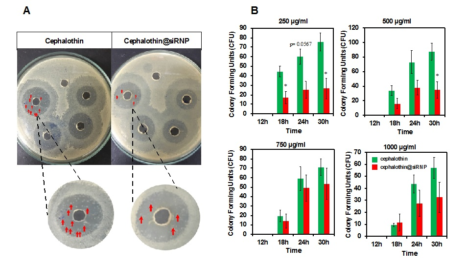 Figure 6   colony recurrence after incubation periods on the agar plates. Data express mean ± (SD), n = 3 and *p < 0.05.