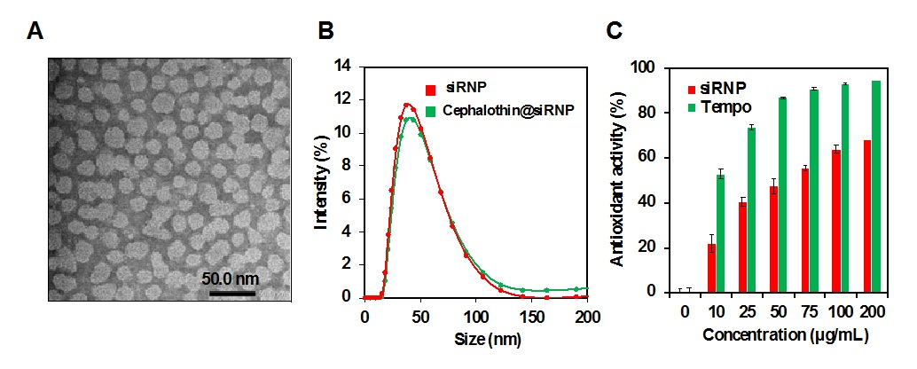 Figure 2   Antioxidant activity of siRNP by DPPH assay. Data express mean ± (SD), n=3.